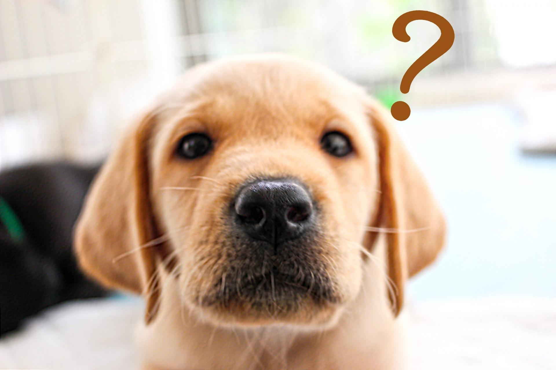 クエスチョンマークを浮かべる犬